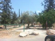 Kfar Saba Royalty-vrije Stock Afbeelding