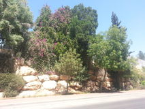Kfar Saba. A city in the center of the country, full of green areas Stock Photo