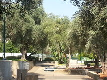 Kfar Saba. A city in the center of the country, full of green areas Stock Images