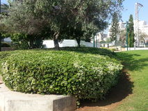 Kfar Saba. A city in the center of the country, full of green areas Royalty Free Stock Photo