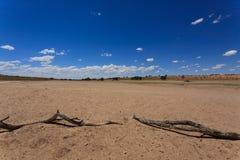 Kgalagadi Lizenzfreies Stockfoto