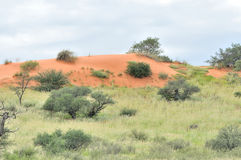 Kgalagadi dune landscape Royalty Free Stock Photos