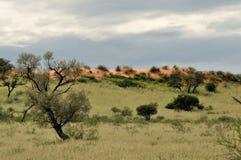 Kgalagadi dune landscape Stock Photos