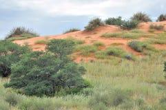 Kgalagadi dune landscape Stock Photography