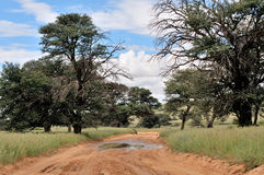 Kgalagadi road landscape Royalty Free Stock Photography