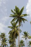 kh nang pha Thailand palm tree Fotografia Stock