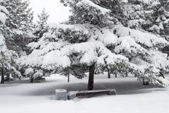 Khabarovsk regionhäftig snöstorm i parkera av staden av Komsomolsk Arkivfoton