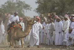 Omani man getting on a camel to start a race royalty free stock photos