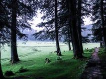 Khajjiar - Himachal Pradesh Stock Image