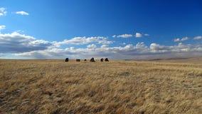 Khakassia Paysages de ressort Photo stock