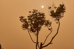 Khamsin in Cairo. A tree and the sun view in Cairo during sandstorm caused by Khamsin in March, 2015 Stock Photos