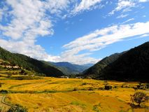 Rice field enroute Khamsum Yulley Namgyal Choten, Bhutan. Khamsum Yulley Namgyal Choten stupa is in the Punakha district, Bhutan. It was built with the intention royalty free stock photography