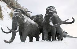 Sculptures of mammoths in Archeopark, Khanty - Mansiysk, Russia Located at the foot of glacial hill, Archeopark shows lifelike sta. Khanty - Mansiysk,Russia Royalty Free Stock Image