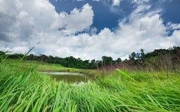 khao国家公园亚伊 免版税库存图片