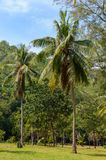 Khao山姆Roi Yot国家公园在隗Buri区, Prachuap Kh 免版税库存照片