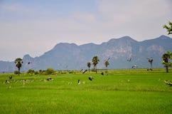 Khao dang hill Stock Image