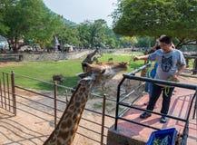 Khao Kheow开放动物园 免版税库存照片