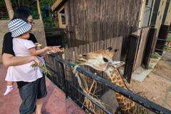 Khao Kheow开放动物园 库存图片