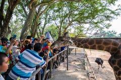 Khao Kheow öppen zoo fotografering för bildbyråer