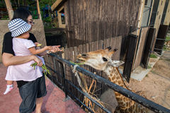 Khao Kheow Open Zoo Stock Images