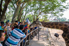 Khao Kheow Open Zoo Stock Image