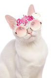 Khao Manee cat wearing bride to be glasses Stock Photos