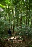 Khao Phanom Bencha国家公园 库存照片