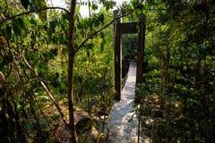 Khao Rea Rob Koh Kood. Summer jungle landscape in national park Klong Kang Kao-Khao Ruea Rop on tropical island Koh Kood in Thailand. Landscape full of green Royalty Free Stock Photos