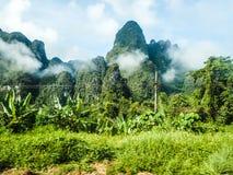 Khao Sok热带雨林 免版税库存图片