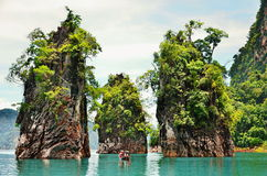 This is khao sok national park Royalty Free Stock Images