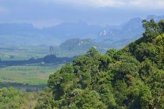 Khao Sok National park, Thailand. Landscape of a rainforest in Khao Sok National park. Thailand Royalty Free Stock Image