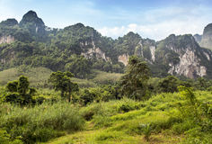 Khao Sok Nationalpark Stockbild