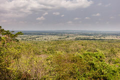 Khao yai national park tropical rain forest Royalty Free Stock Image