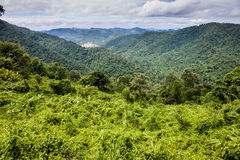 Khao Yai National Park. View at Khao Yai National Park, Thailand Stock Photography