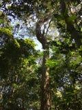 Khao Yai Nationalpark Lizenzfreie Stockfotos
