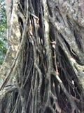 Khao Yai starzenia się drzewo Zdjęcia Stock