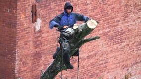 Kharkiv, de Oekraïne - Februari 01, 2019: een mens met een kettingzaag doet het snoeien van een boom, afsnijdt grote takken stock video