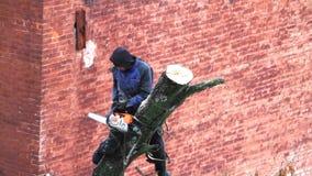 Kharkiv, de Oekraïne - Februari 01, 2019: een mens met een kettingzaag doet het snoeien van een boom, afsnijdt grote takken stock footage