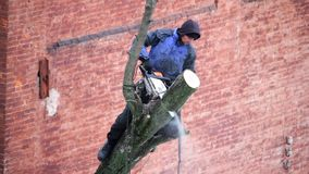 Kharkiv, de Oekraïne - Februari 01, 2019: een mens met een kettingzaag doet het snoeien van een boom, afsnijdt grote takken stock videobeelden