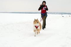Kharkiv - janeiro 14: Competência de cão do trenó Corridas do desportista com cão sobre Fotografia de Stock