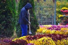 Free Kharkov, Ukraine - 22 October, 2019: Gardener Cleans Leaves From Flowers In Autumn Garden Stock Photos - 163035793
