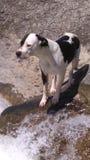 Khays nel fiume immagini stock libere da diritti