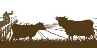 Kühe und Bauernhof-Rolling Hills Landschaft Stockbilder