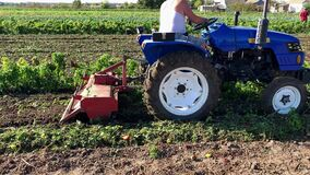 KHERSON, UKRAINE - October 2, 2019: A farmer on a tractor destroys the remnants of a pepper crop. Farming. Destroying a bad crops.