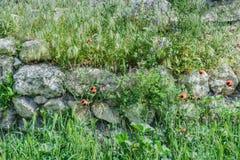 Khersones- Nationaal archeologisch park stock afbeelding
