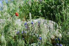 Khersones- Nationaal archeologisch park stock foto's