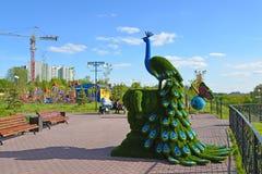 Khimki, Rusland - Mei 30 2017 beeldhouwwerk van peafowl in de kust van parkeco Stock Foto