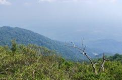 Khitchakut berg, Trat, Thailand. fotografering för bildbyråer