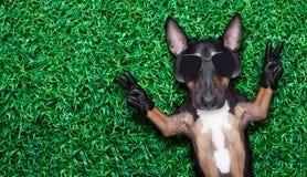 Kühler Hund Stockfoto