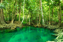 Khlong Song Nam, krabi,Thailand Royalty Free Stock Photo
